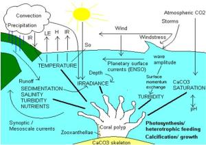 Coralreefsandclimatechange
